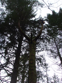 tree fellers wrexham
